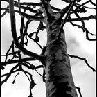 Hamburger Baum