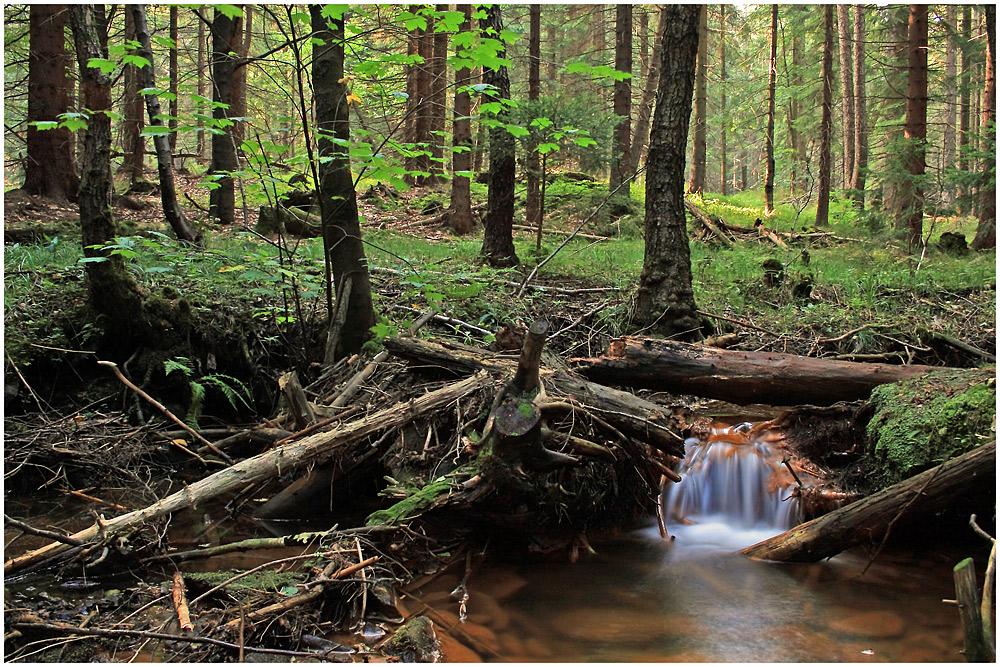 - Hamersky potok -