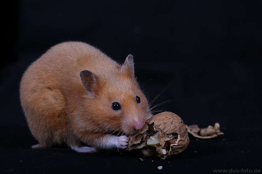 Hamster-Imbiss
