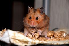 Hamsterbacken
