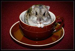 Hamsterleben 1/3 :: essen