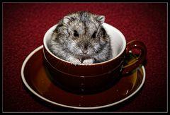 Hamsterleben 2/3 :: warten