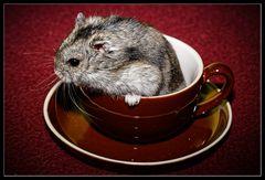 Hamsterleben 3/3 :: abhauen