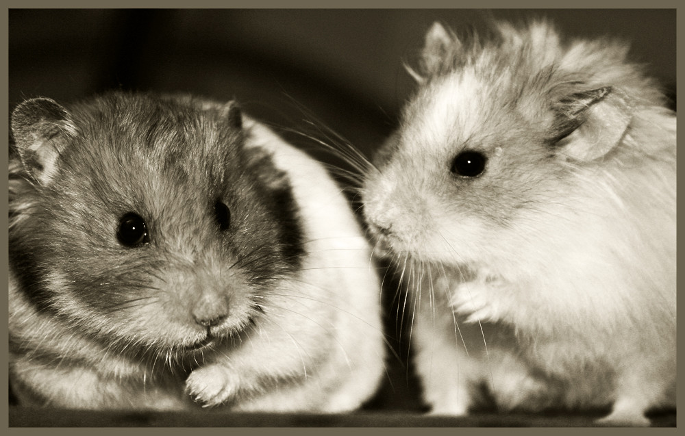 Hamsterposing
