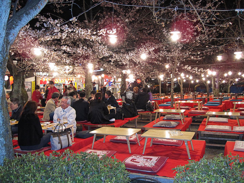 Hanami - Kirschblütenfest