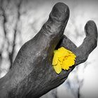 hand and flower on Wednesday