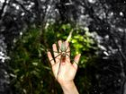 """""""handsome"""" spider at the Whitsundays"""