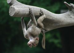 hang loose #2