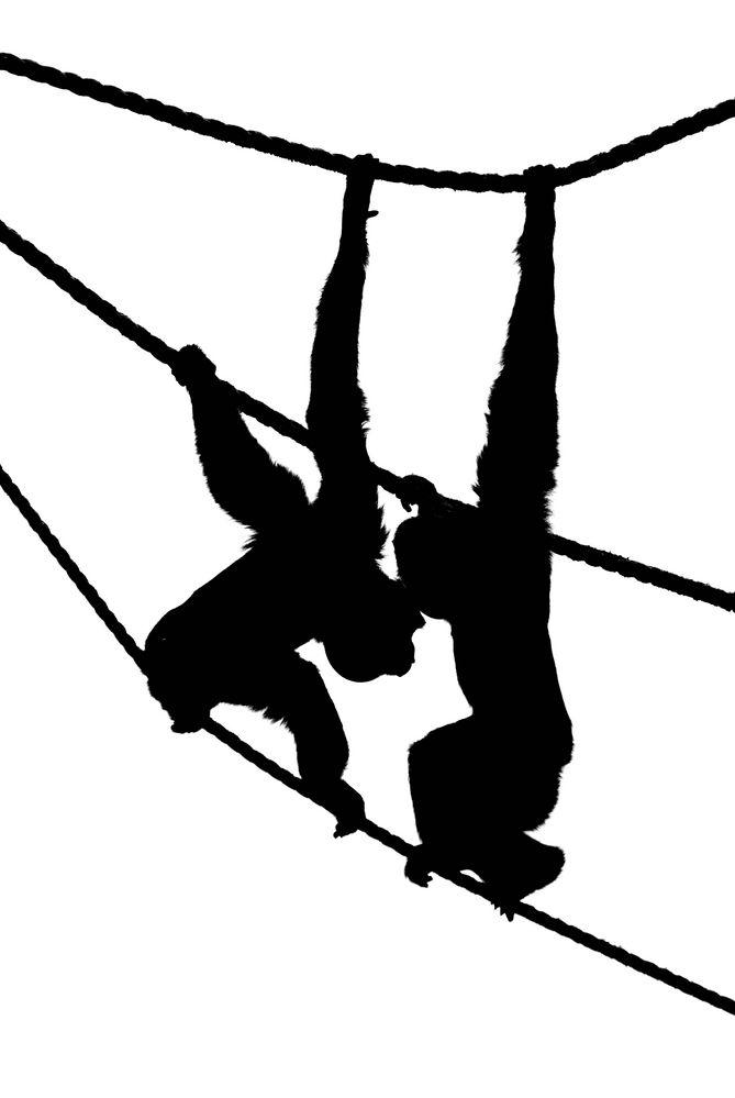 """""""hanging around"""""""