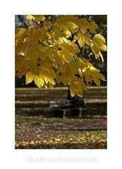 Hann. Mündener - Herbstimpressionen