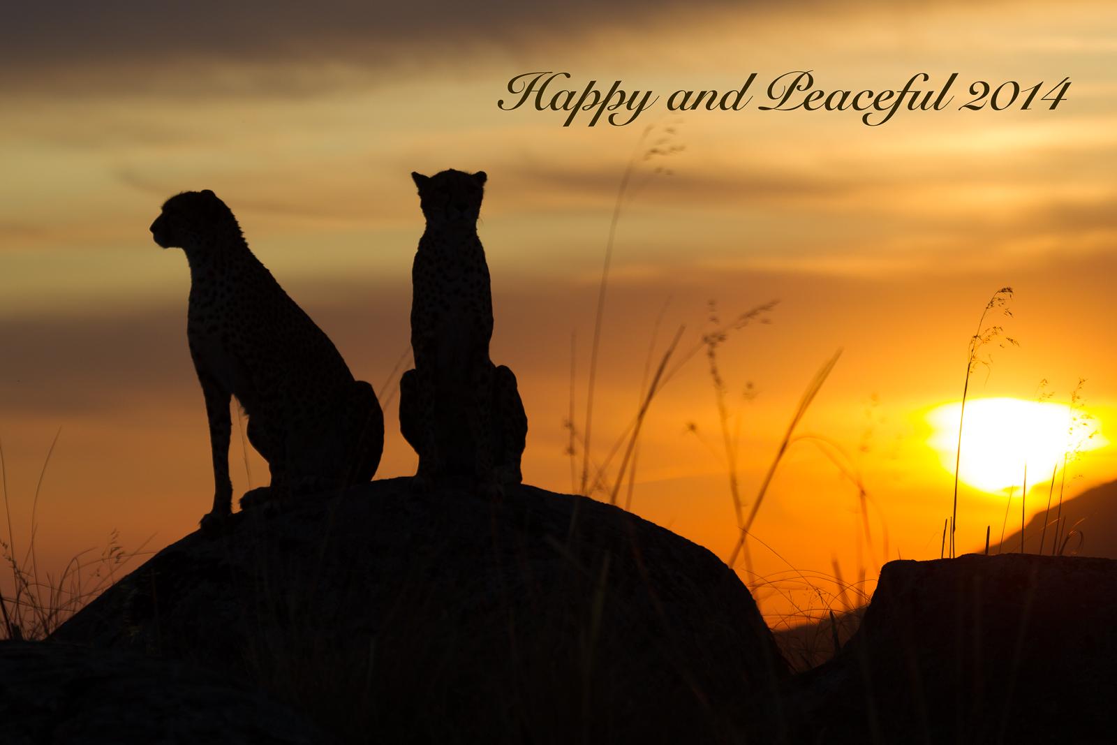 Happy 2014 Wildlife