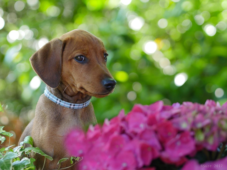 Happy Birthday Foto Bild Hund Welpe Blumen Bilder Auf