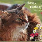 Happy Birthday !!