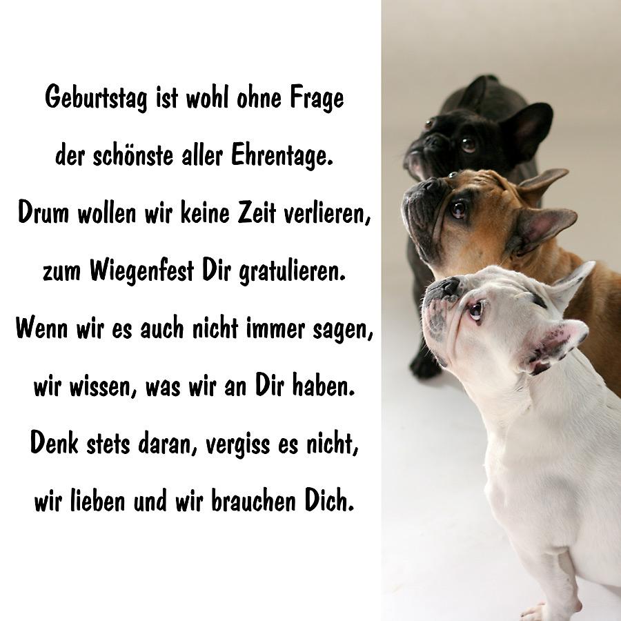 Happy Birthday Foto Bild Tiere Haustiere Hunde Bilder Auf