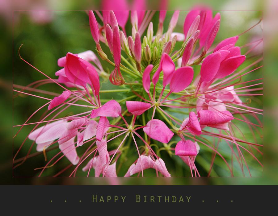 Happy Birthday FELIX ;)