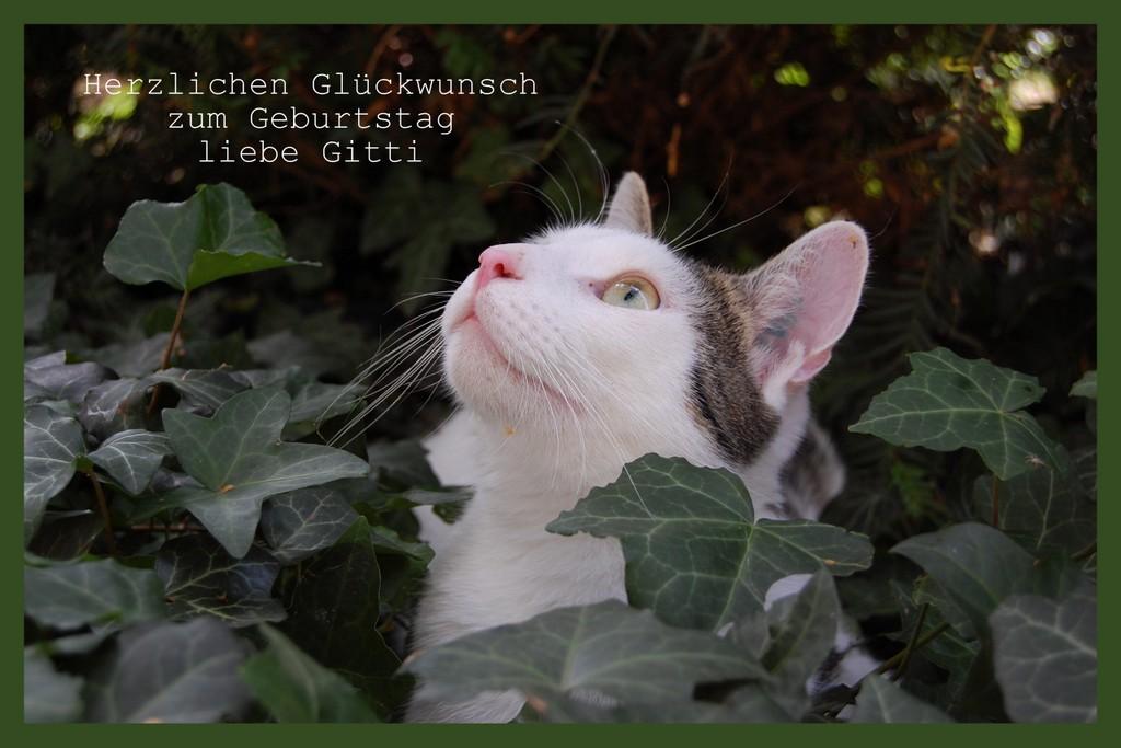 Happy birthday liebe Gitti!