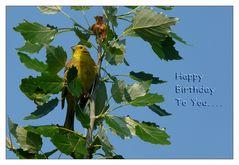 ...Happy Birthday liebe Jo Kurz