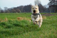 happy dog ;o)