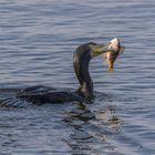 Happy fish catcher