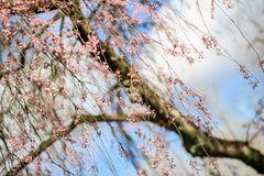 Happy Frühling :-)