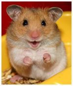 *Happy Hamster*