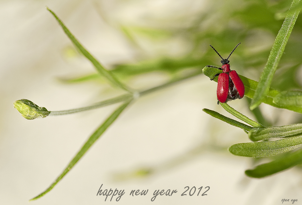 _ HAPPY NEW YEAR _