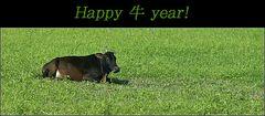 """Happy """"niu"""" year."""