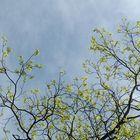 Happy Spring -_-