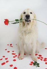 Happy Valentine von Shawnee