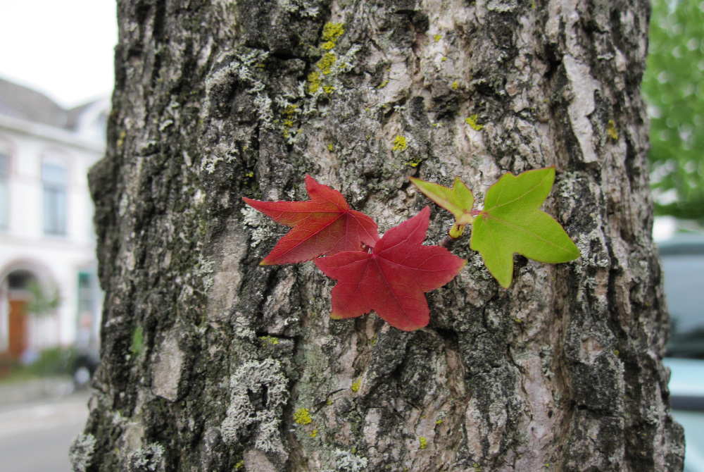 Harbingers of the approaching autumn
