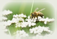 ....hardworking bee...