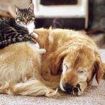 Harmonie zwischen Hund und Katze