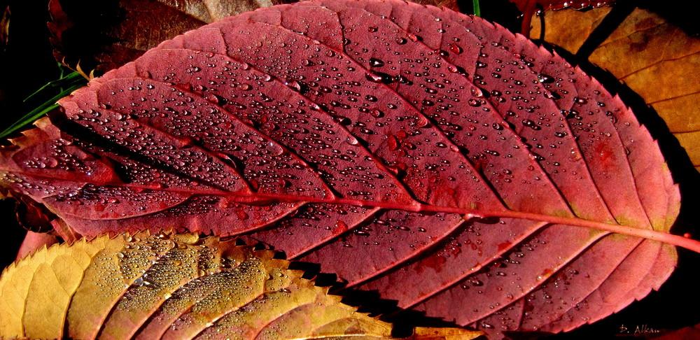 harmonische Herbstfarben...