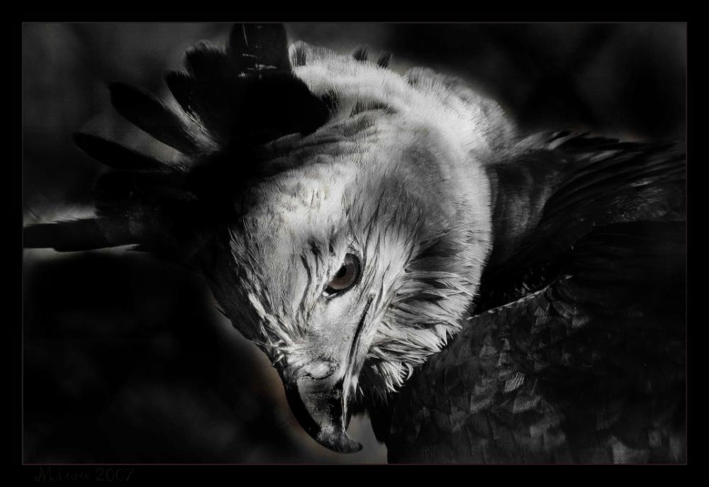 """"""" Harpye in SW """""""