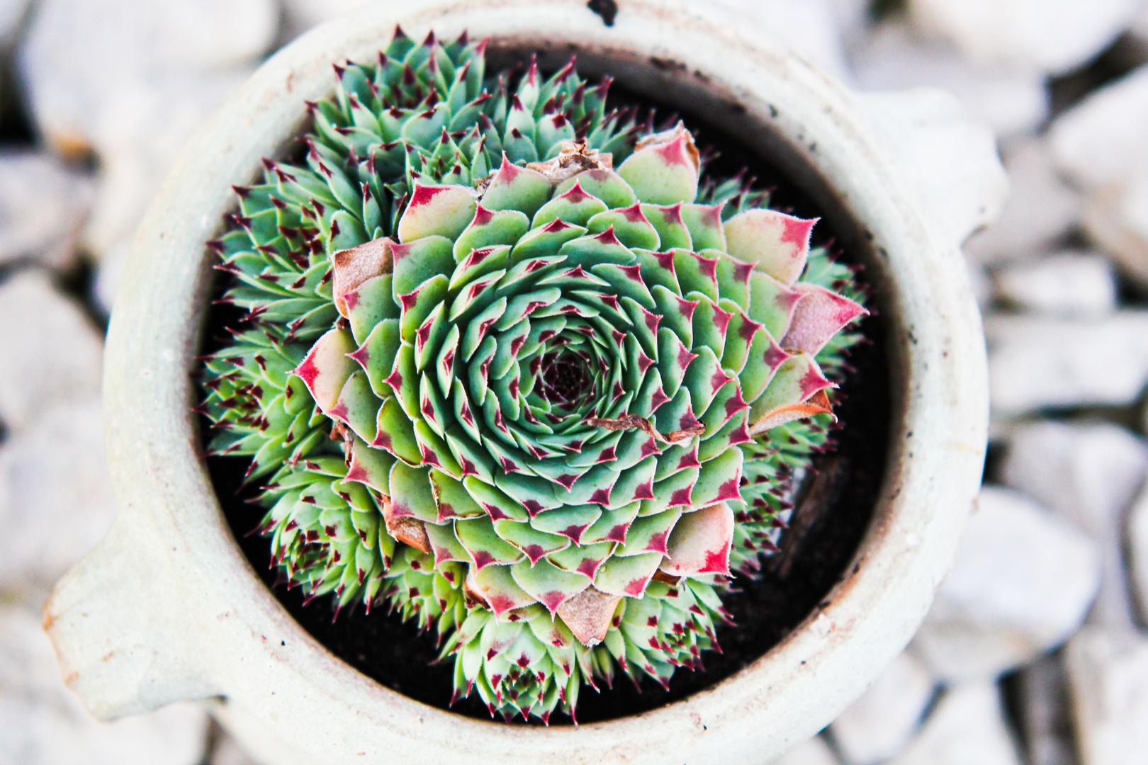 Harte Schale Spitzer Kern Foto Bild Pflanzen Pilze Flechten