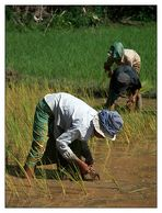 Harter Alltag II - Siem Reap, Kambodscha