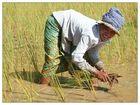 Harter Alltag - Siem Reap, Kambodscha