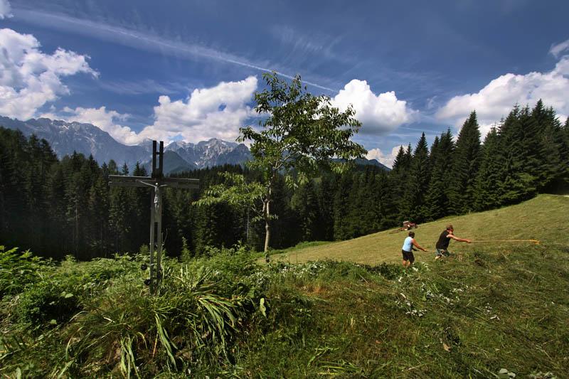 Harvesting of hay