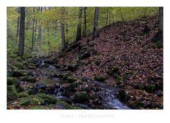 """Harz"""" Herbstimpressionen im Riefenbachtal """""""