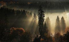 Harz II
