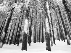 Harz im Winter 2010 - Der Weg vom Brocken nach Schierken - Bild10