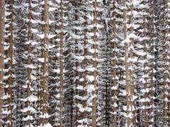 Harz im Winter 2010 - Der Weg vom Brocken nach Schierken - Bild11