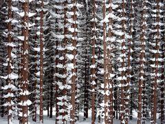 Harz im Winter 2010 - Der Weg vom Brocken nach Schierken - Bild12