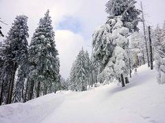 Harz im Winter 2010 - Der Weg vom Brocken nach Schierken - Bild15