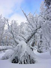 Harz im Winter 2010 - Der Weg vom Brocken nach Schierken - Bild5