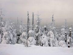 Harz im Winter 2010 - Der Weg vom Brocken nach Schierken - Bild6