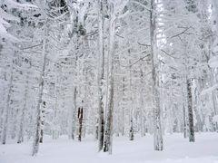 Harz im Winter 2010 - Der Weg vom Brocken nach Schierken - Bild7