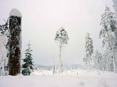 Harz im Winter 2010 - Der Weg vom Brocken nach Schierken - Bild8