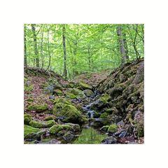 """Harz-Impressionen """" Entlang des Riefenbachtals..."""""""