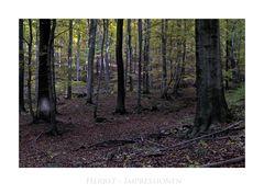 """Harz- Impressionen """" Herbstimpressionen, in den Wäldern des Harzes """""""